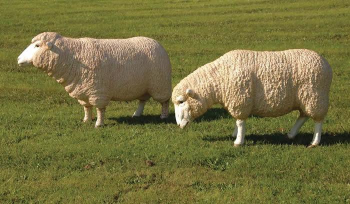 Livestock Kenya - Sheep breeds in Kenya