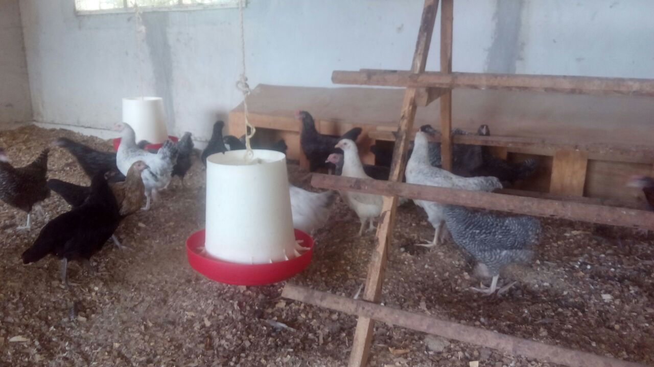 Examples of housing systems for poultry
