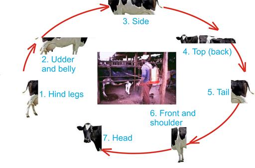 Livestock Kenya - Guidelines for spraying livestock